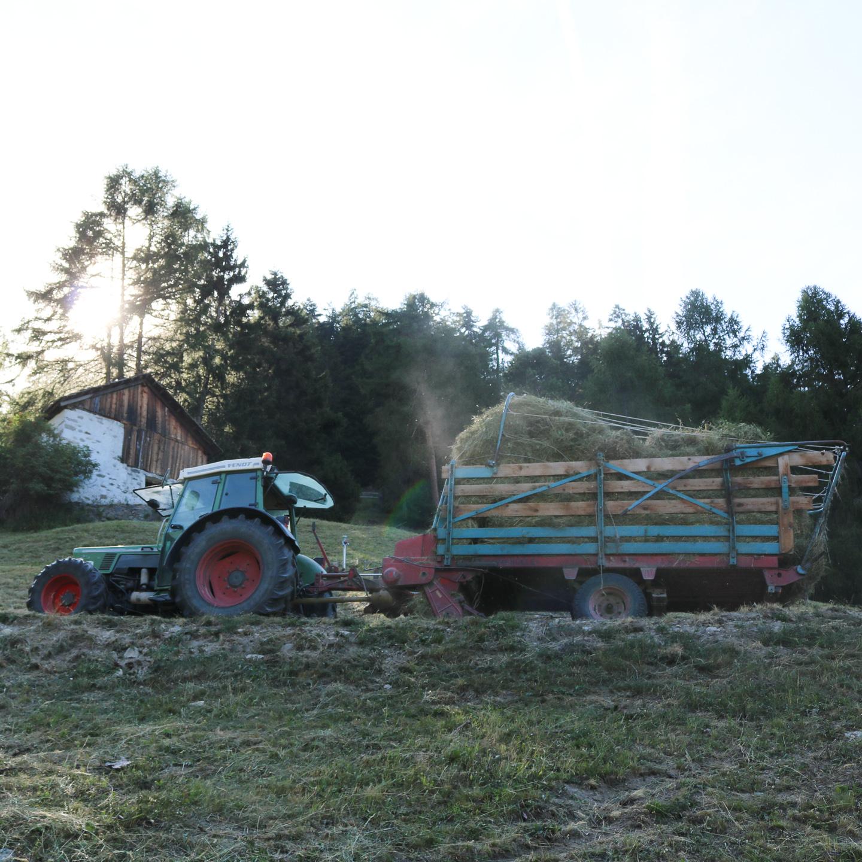 Arbeiten auf dem Bauernhof in Süd Tirol